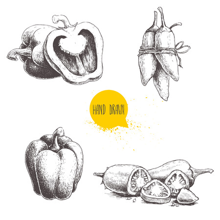 Hand drawn sketch collection of different types of pepper.