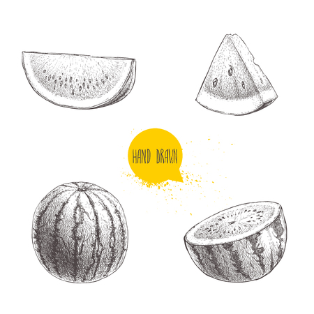 Set of hand drawn sketch style watermelons and watermelon slices. Illustration