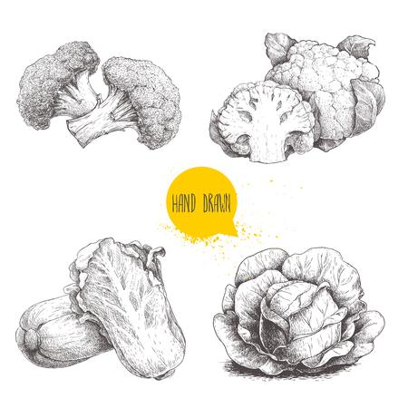 手描きスケッチ スタイル キャベツ セット。大きなキャベツの葉、カリフラワー、ブロッコリー、白菜 pe-tsai。  イラスト・ベクター素材