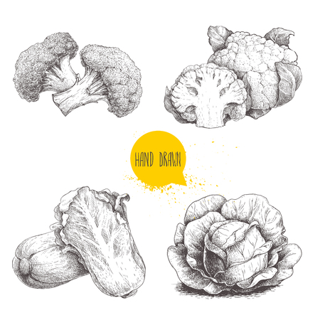 Hand drawn sketch style cabbages set. Cabbage with big leafs, cauliflowers, broccoli and chinese cabbage pe-tsai.