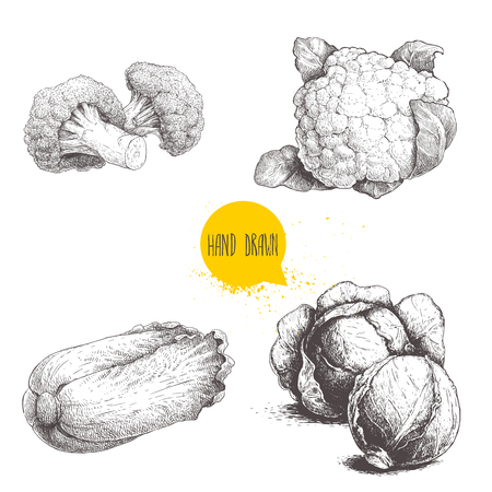 Hand drawn sketch style cabbages set. Cabbages heads, cauliflowers, broccoli and chinese cabbage pe-tsai. Ilustração