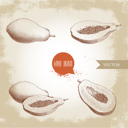 Hand drawn papaya fruits set sketch style vintage vector illustration