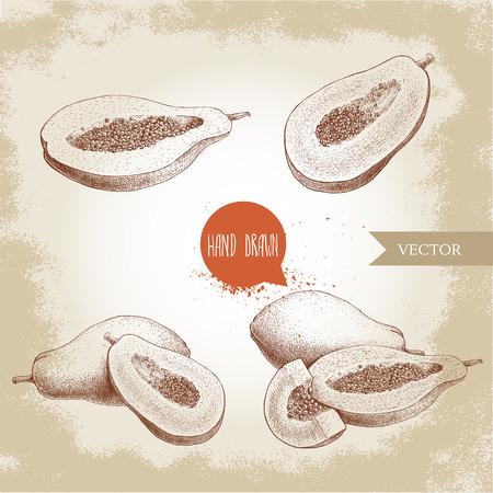 手描きパパイヤ フルーツ セット スケッチ スタイル ビンテージ ベクトル図
