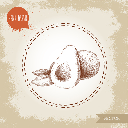 Hand drawn sketch avocado fruits composition. Whole anf half avocado. Bio food vintage illustration.