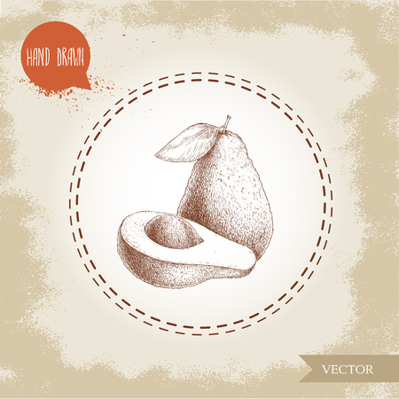 Hand drawn sketch avocado fruits composition. Whole anf half avocado. Bio food vector illustration on old background. Ilustração