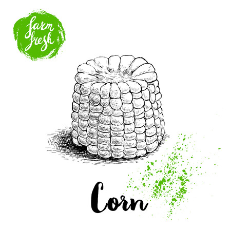 Hand drawn sketch style corn vegetable. Boiled farm fresh sweet corn. Organic cereal vector illustration. Sweetcorn food. Çizim