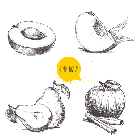 Hand drawn sketch style fruits set. Apricot, peach quarter with leafs, whole pear and half, apple with cinnamon sticks. Vector illustration collection on white  background.