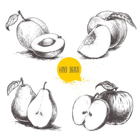 손으로 그린 스케치 스타일 과일 집합입니다. 살구, 복숭아, 절반 배, 사과. 흰색 배경에 고립 된 Bio 음식 벡터 일러스트 컬렉션입니다. 일러스트