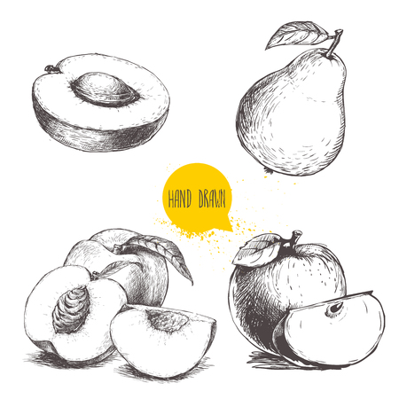 Hand drawn sketch style fruits set. Apricot half with stone, peaches , whole pear, apples. Bio food vector illustration collection on white background.