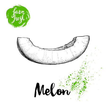 Hand drawn sketch style melon cut isolated on white background, farm fresh food vector illustration.