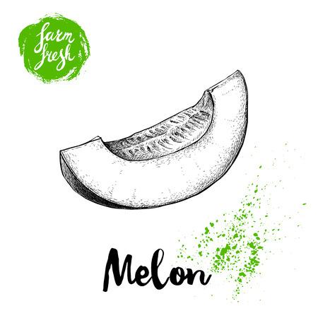 手描きスケッチ スタイルのメロンの分離の白い背景をカットします。ファーム生鮮食品のベクトル図です。  イラスト・ベクター素材