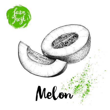 Hand drawn sketch style melon composition isolated on white background, farm fresh food vector illustration.