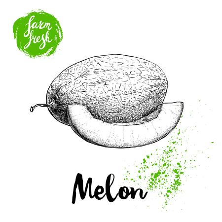 手描きスケッチ スタイル メロンの組成が白い背景のファーム新鮮な食品のベクトル図に分離されました。