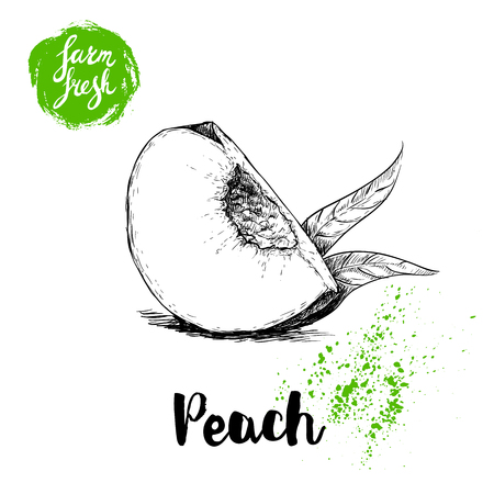 Hand drawn sketch style quarter of peach fruit. Eco food fresh farm poster.