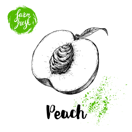 Hand drawn sketch style half of peach fruit with seed.