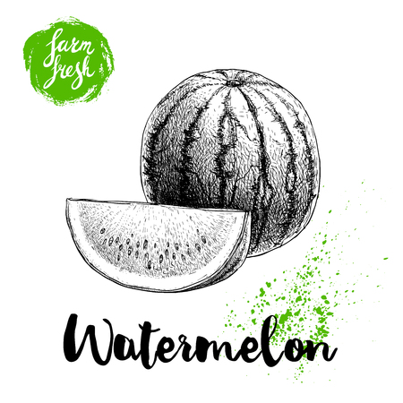 Hand drawn sketch style watermelon composition vector illustration. Farm fresh fruit isolated on white background. Eco organic food poster.