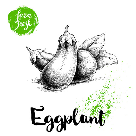 intact: Hand drawn sketch whole eggplants composition with leaves. Illustration isolated on white background. Farm fresh ecological vegetables artwork. Illustration