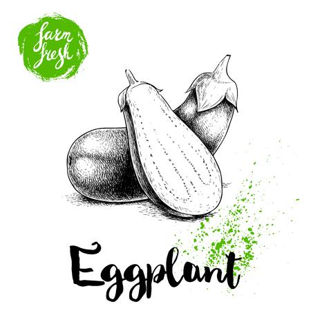 Hand getrokken schets hele aubergines met hal gesneden auberginesamenstelling. Illustratie op witte achtergrond wordt geïsoleerd die. Vers industrieel ecologisch groentekunstwerk.