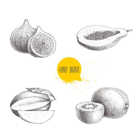 Hand drawn exotic fruits set. Fig fruit, papaya cut with seeds, mango and kiwi fruits. Eco food sketch vector illustration on white background.