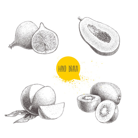 Hand drawn exotic fruits set. Fig fruit, papaya cut with seeds, mango and kiwi fruits. Eco food sketch vector illustration isolated on white background.