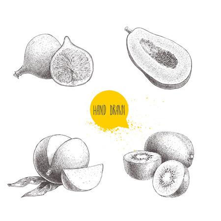 Hand gezeichnete exotische Früchte gesetzt. Feige, Papaya Schnitt mit Samen, Mango und Kiwi Früchte. Eco Lebensmittel Skizze Vektor-Illustration isoliert auf weißem Hintergrund. Standard-Bild - 83527165