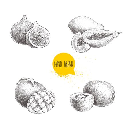 Hand getekend exotisch fruit set. Vijgvruchten, papajasamenstelling, mango met gesneden en kiwivruchten. Eco voedsel schets vector collectie geïsoleerd op een witte achtergrond.