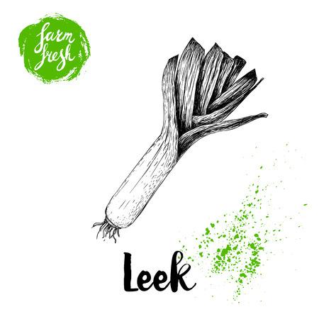 Hand drawn sketch style fresh leek. Vector illustration of organic farm fresh market vegetables. Çizim