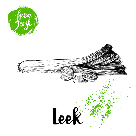 Hand drawn sketch style fresh leek with sliced pieces. Vector illustration of healthy fresh organic food. Farm fresh product. Çizim
