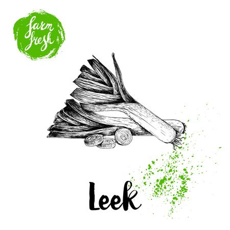 Hand drawn sketch style fresh leeks with sliced pieces. Vector illustration of healthy fresh organic food. Farm fresh market.