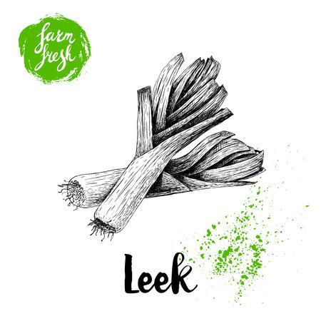 Hand drawn sketch style fresh leek group composition. Isolated on white background. Vector illustration of healthy fresh organic food. Farm fresh market. Çizim