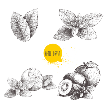 Hand drawn sketch style mint illustrations set. Illustration