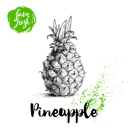 Hand drawn sketch pineapple poster. Vector pineapple eco food illustration. Hand drawn farm fresh badge. Summer and vacation symbol.