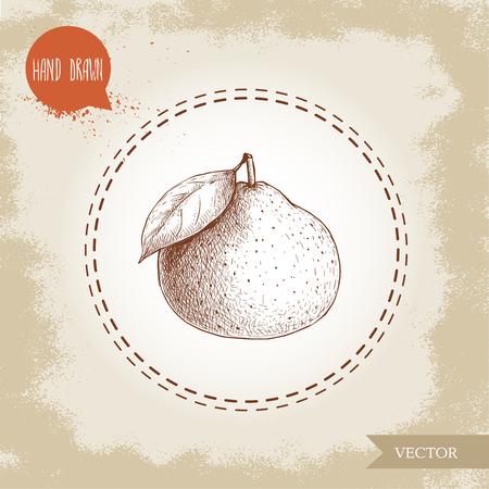 Hand gemaakte schetsmandarin. Vintage stijlillustratie van mandarijn met blad. Eco voedsel vectorillustraties.