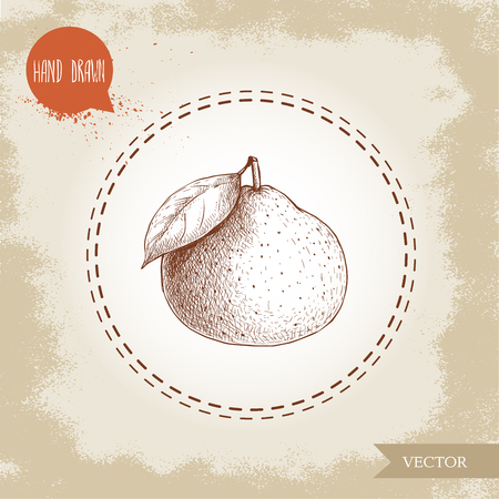 Hand made sketch mandarin. Vintage style illustration of tangerine with leaf. Eco food vector artwork.