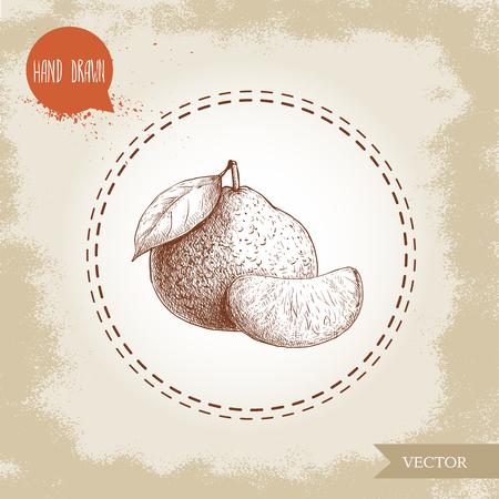 Hand made sketch mandarin with leaf and slice. Vintage style illustration of tangerine with leaf. Eco food vector artwork.