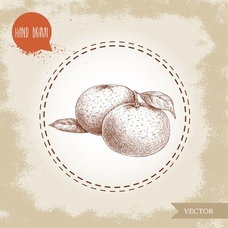 ハンドメイドとマンダリンの組成をスケッチの葉します。葉がタンジェリンのビンテージ スタイルのイラスト。エコ食品ベクター アートワーク。