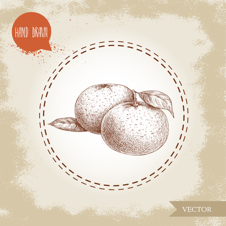 Hand made sketch mandarin composition with leafs. Vintage style illustration of tangerine with leaf. Eco food vector artwork.