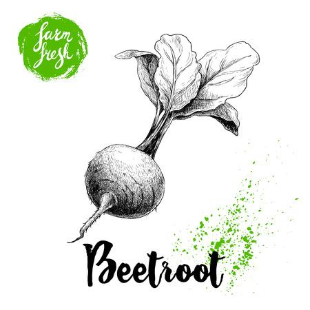 手描きとビートルートを葉します。白い背景で隔離のビンテージ ベクトル図をスケッチします。ファームの新鮮な野菜。  イラスト・ベクター素材
