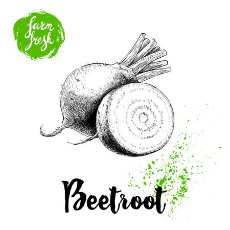 スライスしたルート構成と手描き下ろしビートの根。ビンテージ ベクトル図をスケッチします。ファームの新鮮な野菜のポスター。