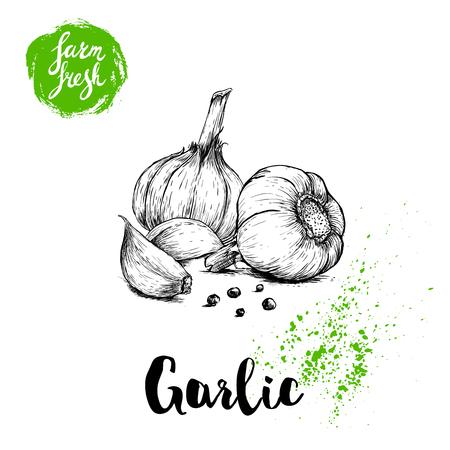 Dibujado a mano dibujo grupo de ajo con pimienta negra. Ilustración de vector de comida de granja fresca. Cartel de verduras de granja.