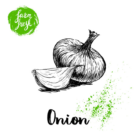 Hand drawn sketch onions. Whole and onion segment. Farm fresh vegetables poster.