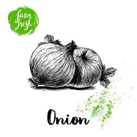 Hand drawn sketch onions with parsley leafs. Whole root composition. Farm fresh vegetables poster. Ilustração