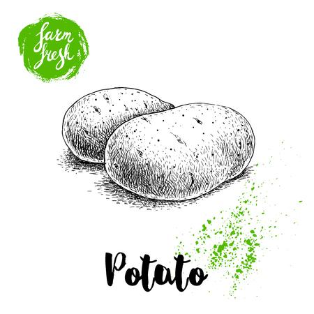 熟したジャガイモの手描きスケッチ スタイル イラスト。ファーム新鮮なベクトル野菜ポスター。  イラスト・ベクター素材