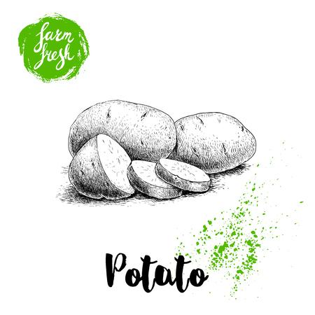 熟したジャガイモとスライスの手描きスケッチ スタイル イラスト。ファーム新鮮なベクトル イラスト ポスター。