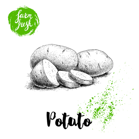 Hand-drawn sketch style illustration of ripe potatoes and slices. Farm fresh vector illustration poster.