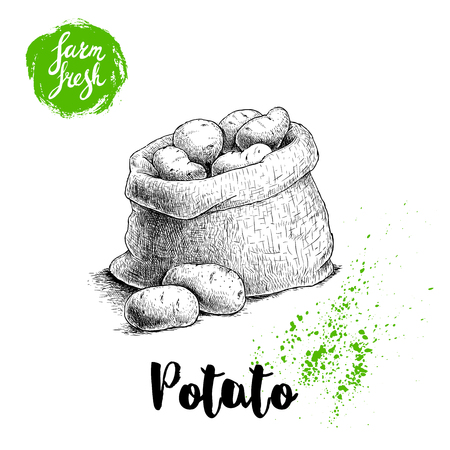 Hand-drawn sketch style illustration of ripe potatoes in burlap bag. Farm fresh vector illustration poster. Иллюстрация