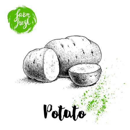 Hand-drawn sketch style illustration of ripe potatoes and slices. Farm fresh vector illustration poster. Imagens - 85280817