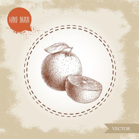 手描きのスケッチ スタイル オレンジ色の果実の組成。手作りの古い探している背景に分離されたベクトル柑橘系の果物のイラスト。