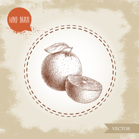Hand drawn sketch style orange fruits composition. Hand made vector citrus fruit illustration isolated on old looking background.