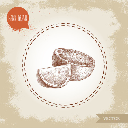 Hand drawn sketch style orange fruit composition. Half orange and segment slice. Hand made vector citrus fruit illustration isolated on old looking background.
